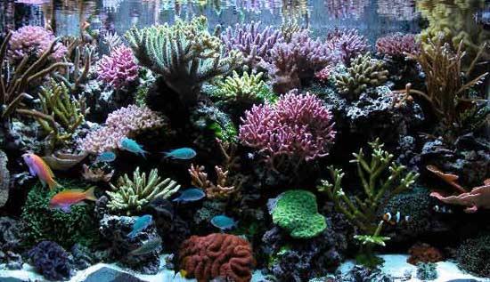 Que es Aquascaping? 0203tankpic