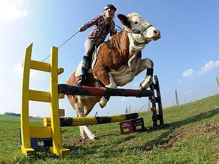 A falta de caballos, buenas son las vacas Regina-mayer-440