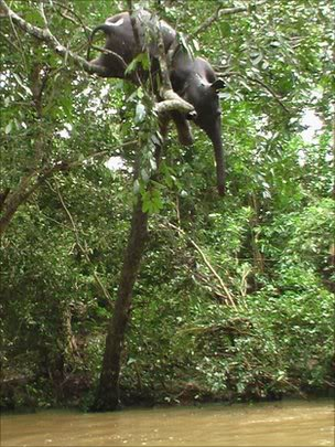 Cambio climático y la imperiosa necesidad de medidas urgentes Elefantedeadenarbol