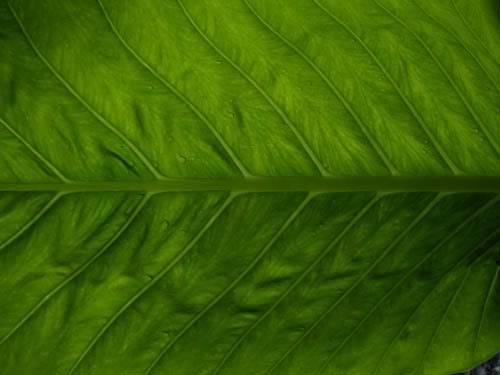 Algunas fotos mías como p/fondos de pantalla VerdehojaH