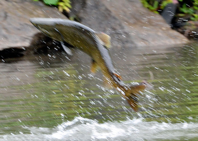 Let's see some fish 11583922-standard_zpsfd7da76a