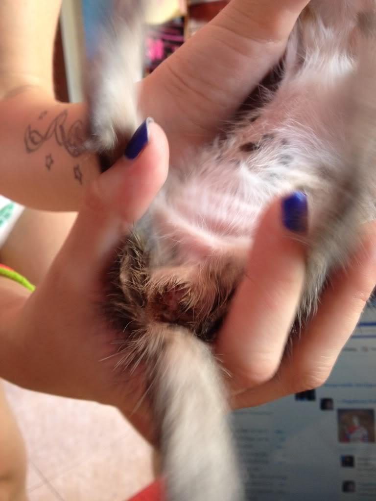 Διατροφη σε μωρο γατακι? 0b6396d4
