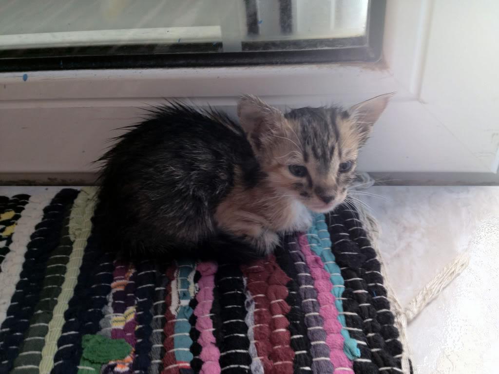Διατροφη σε μωρο γατακι? 51d40959