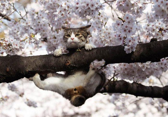 Pregúntale a Ore-sama ! - Página 4 Cat-hanging-on-branch-tree