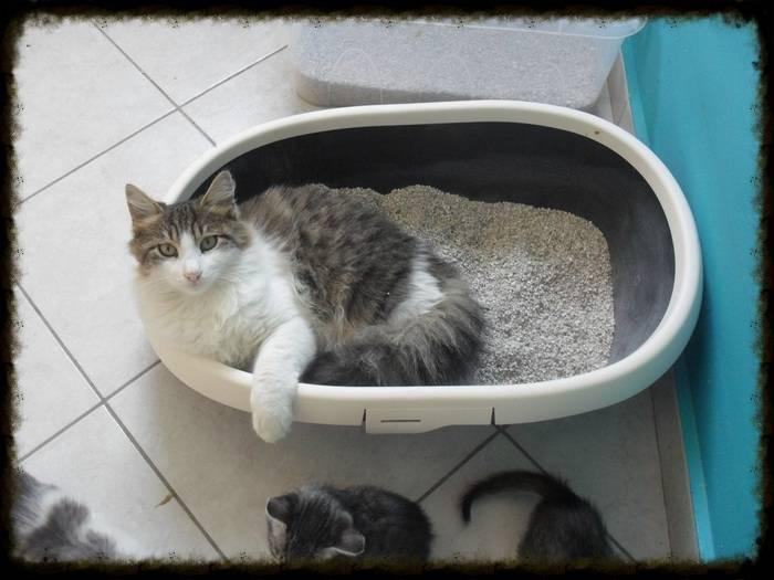 Χαρίζεται ο Αδάμ, ο γάτος που ονειρεύεσαι! Υιοθετήθηκε!!! - Σελίδα 2 031dd574-2d0c-45b0-b944-2904adf434c1_zps048fcb97