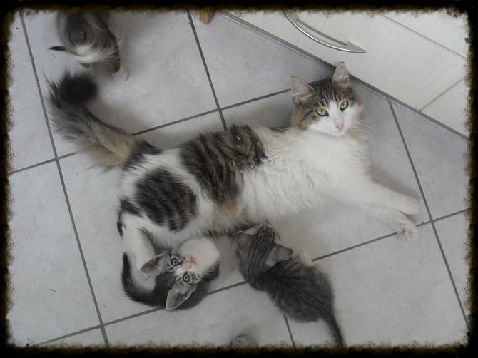 Χαρίζεται ο Αδάμ, ο γάτος που ονειρεύεσαι! Υιοθετήθηκε!!! - Σελίδα 2 2401e06e-5d5e-4dd6-9616-bebb85a0aaa6_zps5ce24f83