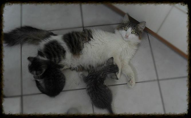 Χαρίζεται ο Αδάμ, ο γάτος που ονειρεύεσαι! Υιοθετήθηκε!!! - Σελίδα 2 3127029f-df63-4672-a2fb-12790b413689_zps5970a498