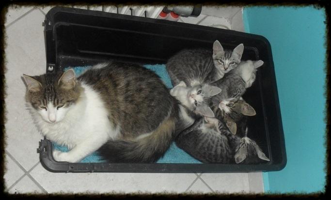 Χαρίζεται ο Αδάμ, ο γάτος που ονειρεύεσαι! Υιοθετήθηκε!!! - Σελίδα 2 3547835a-034b-4081-b863-b53f29bb22b6_zps3787ddbd