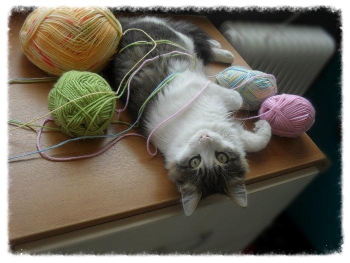 Χαρίζεται ο Αδάμ, ο γάτος που ονειρεύεσαι! Υιοθετήθηκε!!! - Σελίδα 2 569dbfb2-c799-41d6-b864-a61217609b47_zps4c296b68