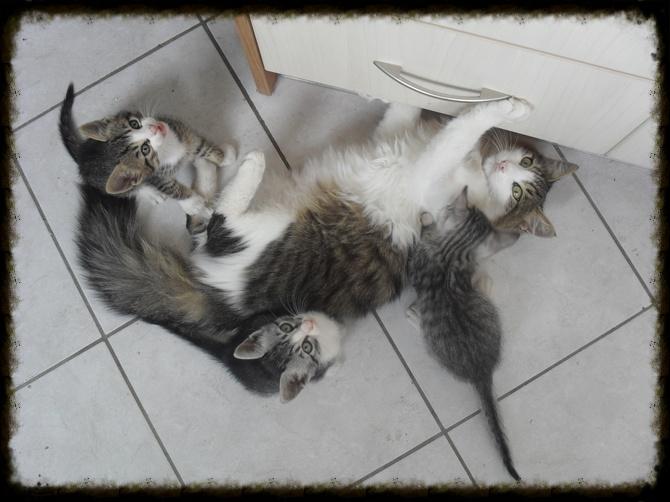 Χαρίζεται ο Αδάμ, ο γάτος που ονειρεύεσαι! Υιοθετήθηκε!!! - Σελίδα 2 6584124a-fe5f-4ad2-9422-15a7f5385183_zps4ca62be7