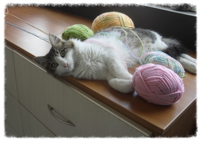 Χαρίζεται ο Αδάμ, ο γάτος που ονειρεύεσαι! Υιοθετήθηκε!!! - Σελίδα 2 6bed3be9-053b-40d8-b868-cf2261f56703_zpsef224ba0