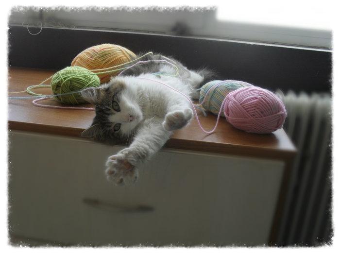 Χαρίζεται ο Αδάμ, ο γάτος που ονειρεύεσαι! Υιοθετήθηκε!!! - Σελίδα 2 827954c2-265e-4178-87fb-b57a7c4bea7e_zpsdf872448