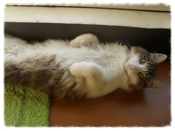 Χαρίζεται ο Αδάμ, ο γάτος που ονειρεύεσαι! Υιοθετήθηκε!!! 9769068c-433a-4251-9f2d-27e9f594c5c3_zpsfb3cf0b4