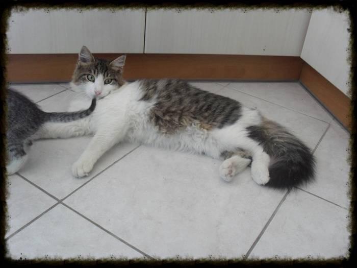 Χαρίζεται ο Αδάμ, ο γάτος που ονειρεύεσαι! Υιοθετήθηκε!!! 9feb4c17-09e8-4fcf-81e7-ac2e3f3b97d9_zps880bc34b