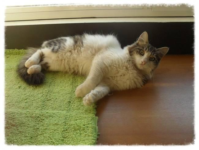 Χαρίζεται ο Αδάμ, ο γάτος που ονειρεύεσαι! Υιοθετήθηκε!!! A0cafec5-ba93-462a-989f-9330b35f0e0a_zps4c2ec9c3
