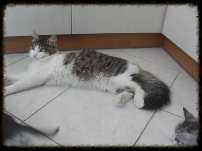 Χαρίζεται ο Αδάμ, ο γάτος που ονειρεύεσαι! Υιοθετήθηκε!!! Da0fbe62-9e1b-4cf7-ac08-54c6514eec68_zpscf256eec
