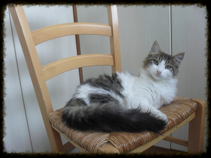 Χαρίζεται ο Αδάμ, ο γάτος που ονειρεύεσαι! Υιοθετήθηκε!!! - Σελίδα 2 Dee567fd-11ac-4b99-9657-2e97a6fb8633_zpse351fac4