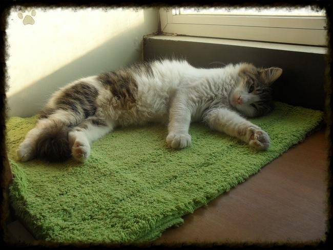Χαρίζεται ο Αδάμ, ο γάτος που ονειρεύεσαι! Υιοθετήθηκε!!! - Σελίδα 2 F293744b-77c6-404a-9a1b-e44d17825bbb_zps716efa9c