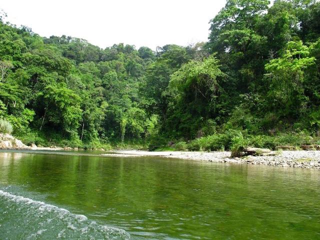 Un paseo bichero por Panamá 10985028_679832722148866_1857014911394942268_n_zpsmbwhu3va