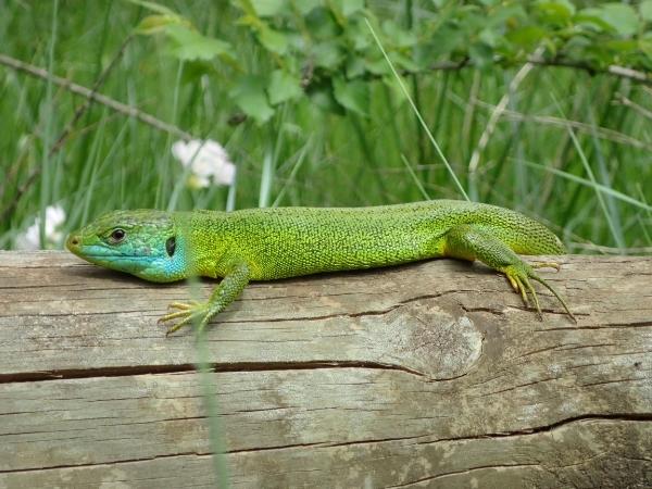 Una de reptiles 7e434f10-b6b7-43d6-bf51-90fbd78569bc_zpsf4yswymd