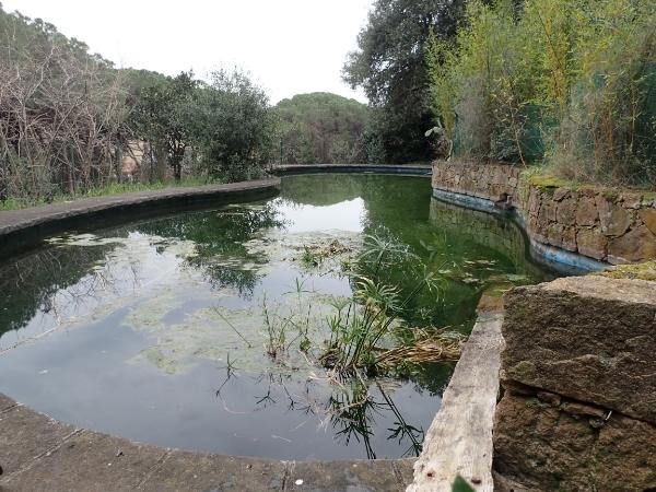 Piscinas abandonadas, estanques y anfibios P2217046_zpsahqrzraa