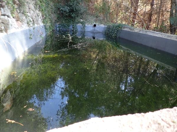 Piscinas abandonadas, estanques y anfibios P2287318_zpswx9tug6v