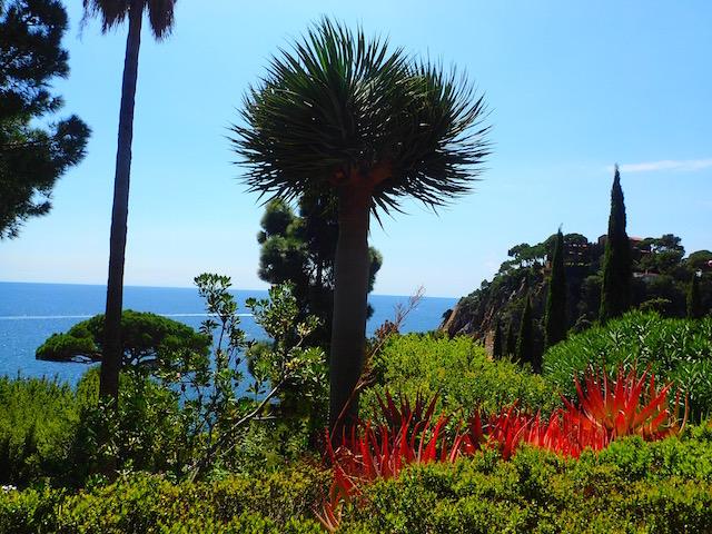 Un paseo por el jardín botánico Mar i Murtra de Blanes. P4248557_zps8my8ulwk