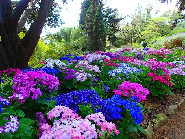 Un paseo por el jardín botánico Mar i Murtra de Blanes. P4248595_zpsdlodttqf