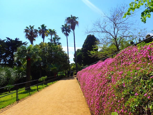 Un paseo por el jardín botánico Mar i Murtra de Blanes. P4248596_zpsaobiijig