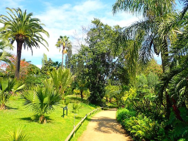 Un paseo por el jardín botánico Mar i Murtra de Blanes. P4248601_zpsppk5oo8e