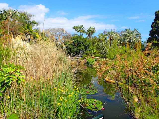 Un paseo por el jardín botánico Mar i Murtra de Blanes. P4248613_zpsomawjajg