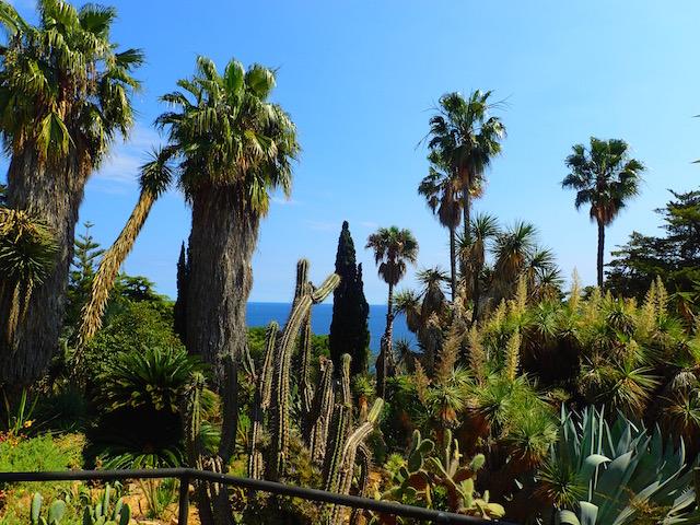 Un paseo por el jardín botánico Mar i Murtra de Blanes. P4248624_zpsijr4ov6q