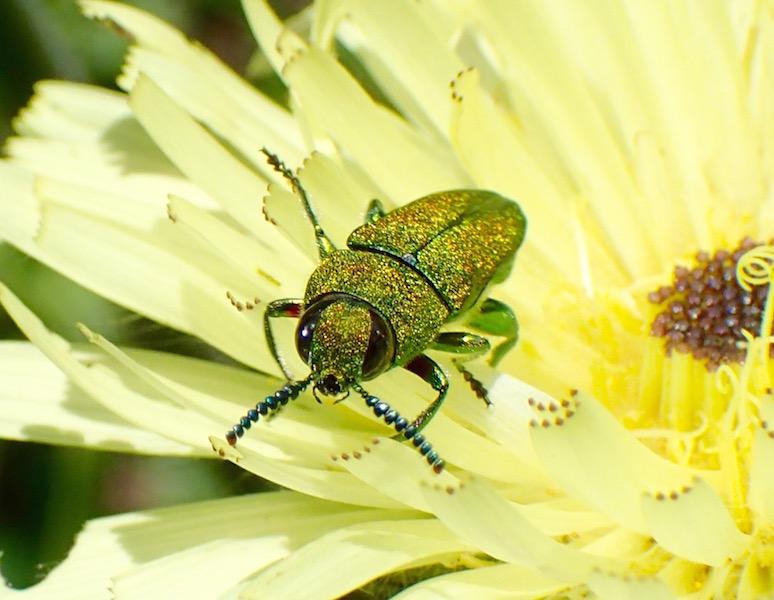 Flores y bichos P5169132_zpsiqczogvm