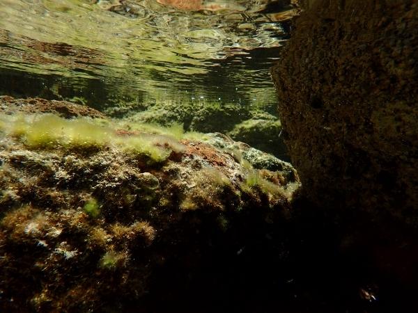 Un paseo bichero por el algario litoral Be388435-a0c0-411a-bd4a-13e8a4bf2059_zpsftryfpl7