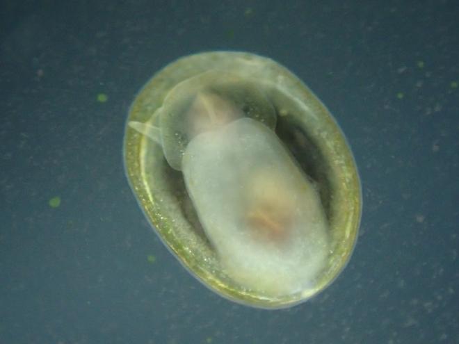 Cópula de Ancylus E56a5402-d988-421b-92d6-7d78cd85675f_zps7c0c4347