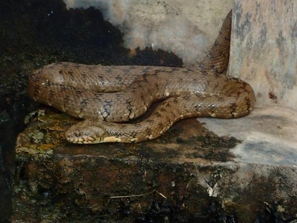 Una de reptiles E7b74020-12f7-488a-b11f-ba8ef3553c3f_zpsyhq7q2op