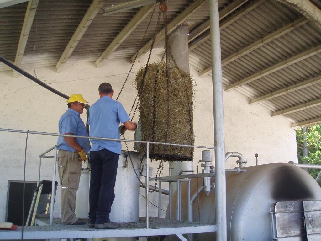 Destilado de plantas aromáticas y medicinales Vaciadodelvasodestilador