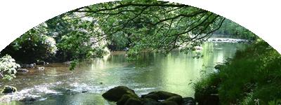 Bosque y río