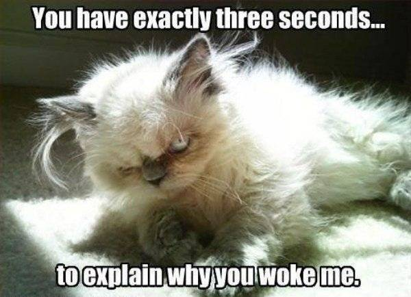 Lolcats thread! - Page 8 Explain_Yourself_zps64b6ddb9
