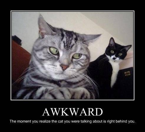 Lolcats thread! - Page 8 Funny-pictures-cat-situation-is-awkward_zps1ae7f15b