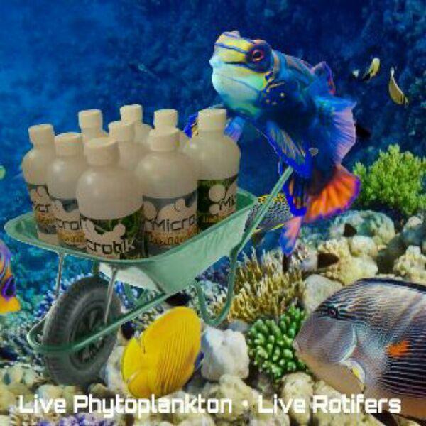>> Live Rotifers & Live Phytoplankton BRC© << IMG_2015022510246_zpstc1hwkz9