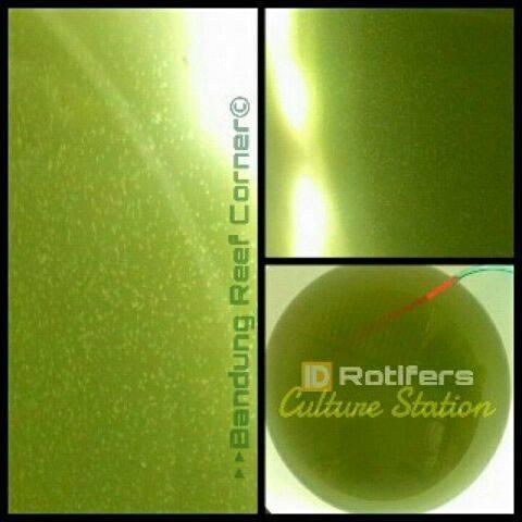 >> Rotifer BRC 500ml 75rb << IMG_20150729_22458_zpscdw8opa6