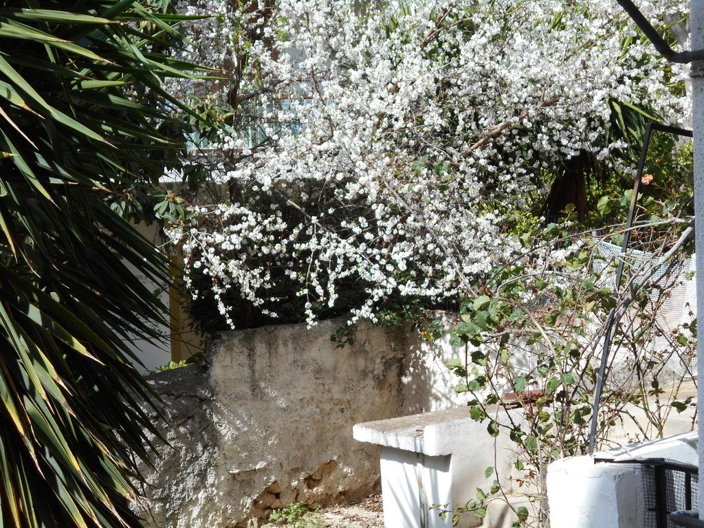 χανς και γκρετελ λουλουδακια του χειμωνα DSCN0651_zpsnpyaiwap