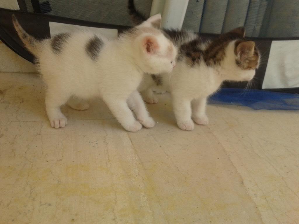 Χαριζονται γατακια γλυκα σαν καραμελα!!! 2014-04-11120549_zps7b54d71c