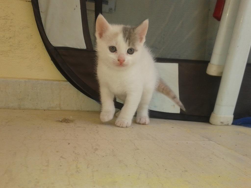 Χαριζονται γατακια γλυκα σαν καραμελα!!! 2014-04-11120647_zps5065841c
