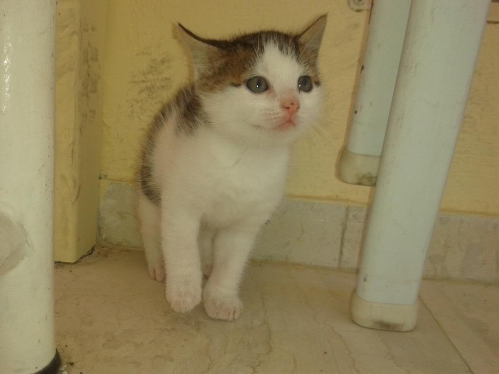 Χαριζονται γατακια γλυκα σαν καραμελα!!! 2014-04-11120706_zps2f619b35