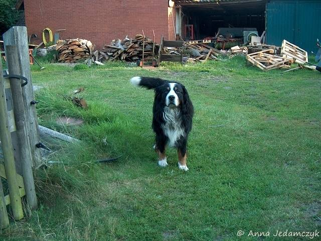 Der Hundethread - Seite 6 K-26Juli20121