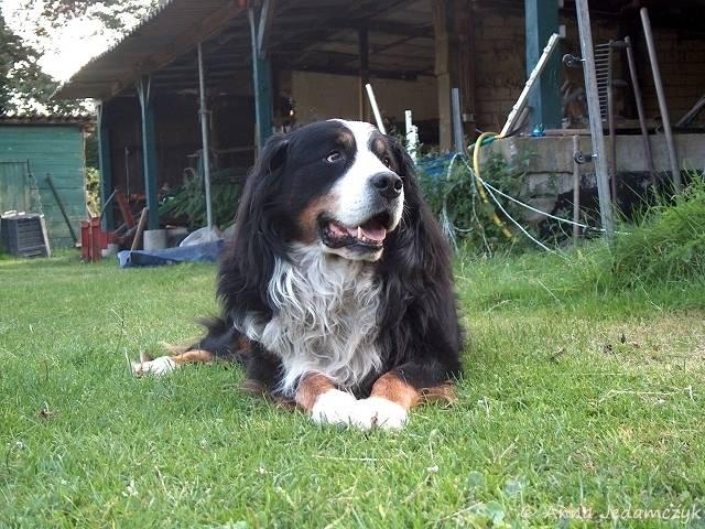 Der Hundethread - Seite 6 K-26Juli20127