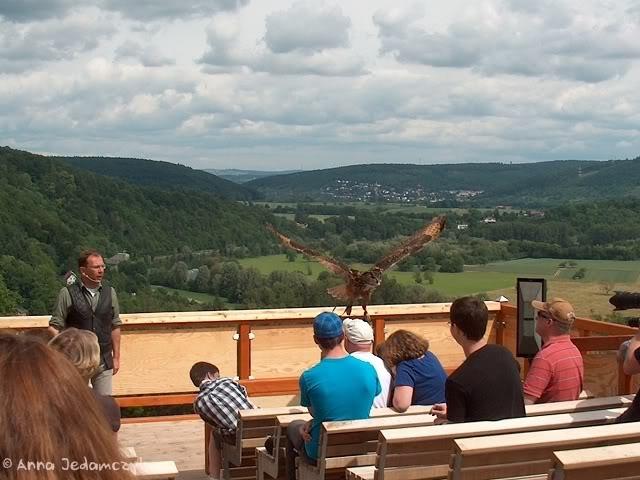 Burg Guttenberg und die Greifvogelwarte K-HPIM6897