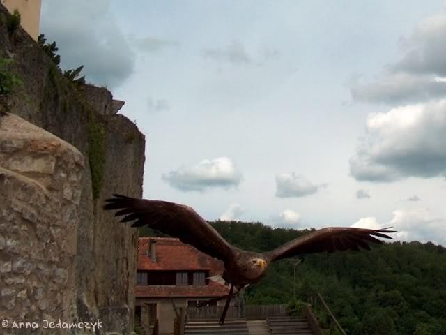 Burg Guttenberg und die Greifvogelwarte K-HPIM6906